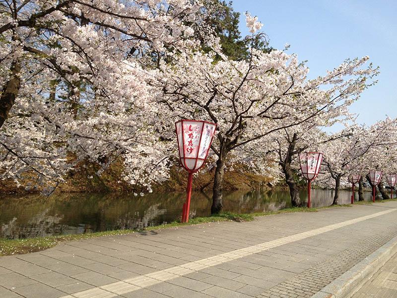 がん研アカデミー桜